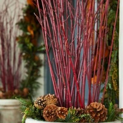 red twig dogwood branches in holiday planters framing entryway