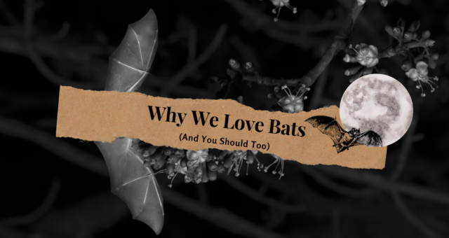 Why We Love Bats (And You Should Too)